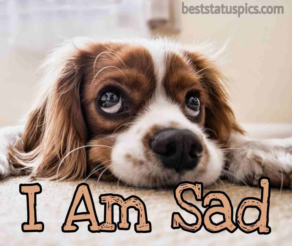i am so sad image for whatsapp dp with cute dog
