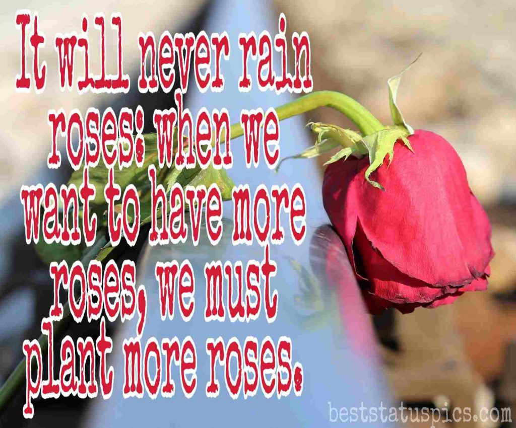 sad love quotes and images with rose dp