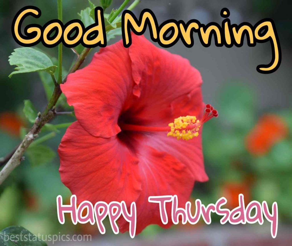 good morning thursday images with red flower for whatsapp