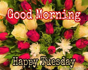 good morning happy tuesday with flowers, red rose, yellow rose photo