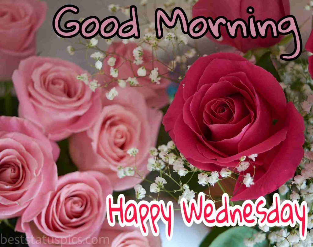 happy wednesday good morning image with red rose flowers