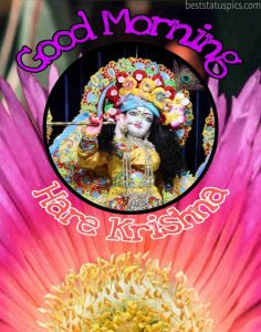 beautiful good morning hare krishna image HD with flower for Whatsapp DP