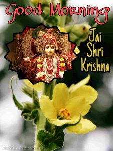 Jai shri krishna good morning images for Whatsapp DP