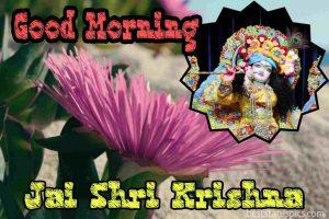 good morning Jai shri krishna image with flower for Whatsapp DP