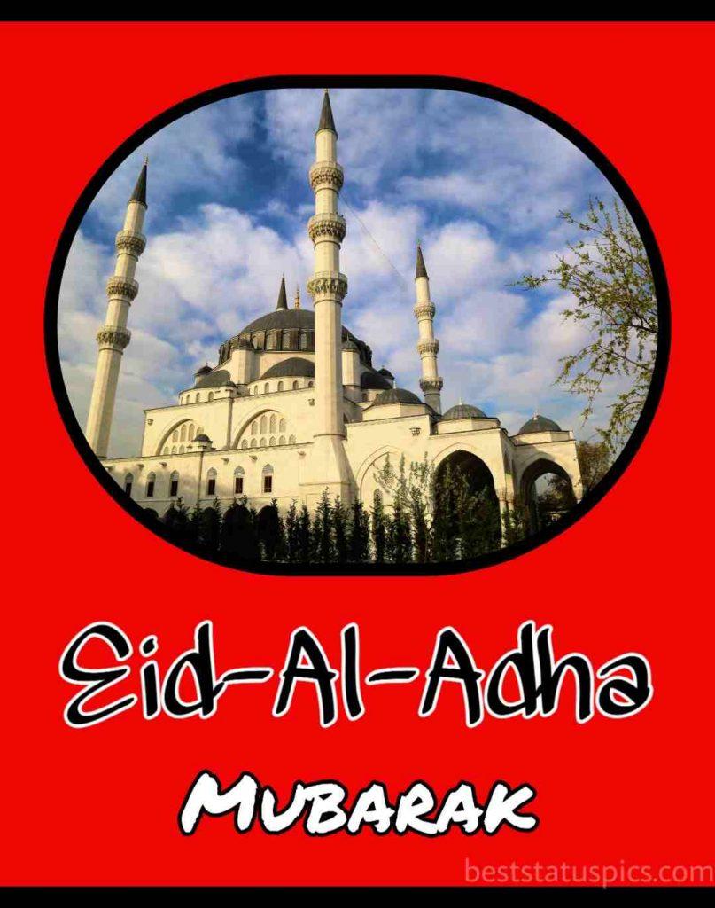 happy eid al adha 2021 wishes, whatsapp status, dp