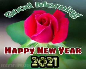 Cute happy new year 2021 and good morning wishes with red rose for Whatsapp