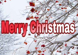 Latest merry christmas 2021 wishes with snow, flowers and winter nature photo for facebook