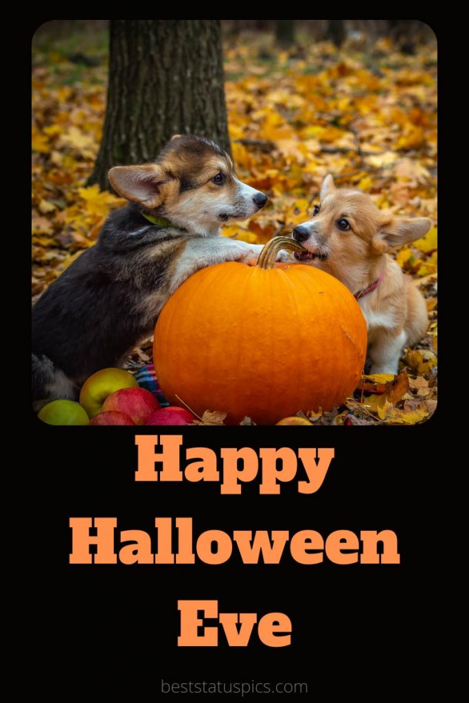 Happy Halloween Eve 2021 images with dogs
