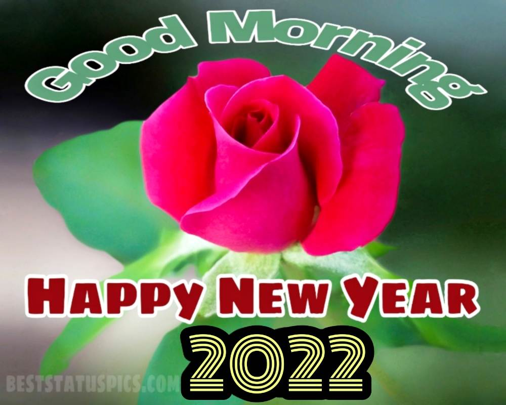 Happy New Year 2022 and Good Morning greeting card with red rose