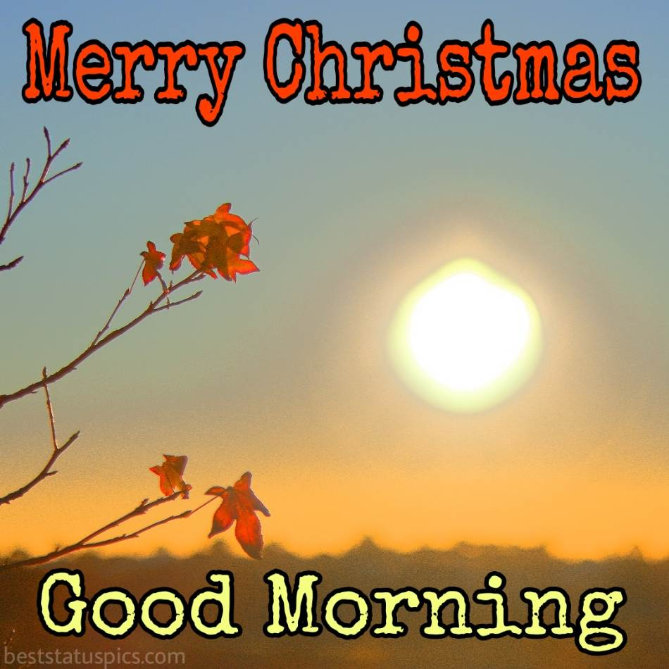 Merry christmas Good morning 2022 greetings and picture HD with sunshine and flowers