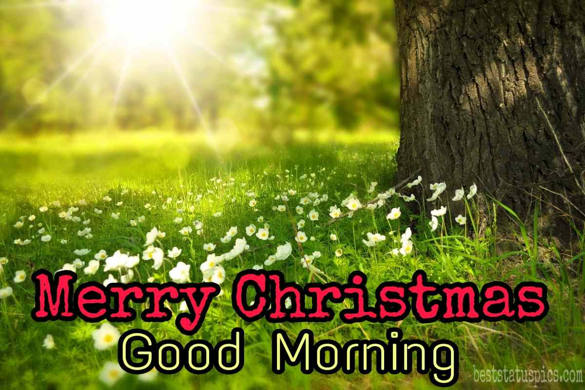 Good morning and Merry christmas 2022 wishes picture HD with flowers, nature and sunshine