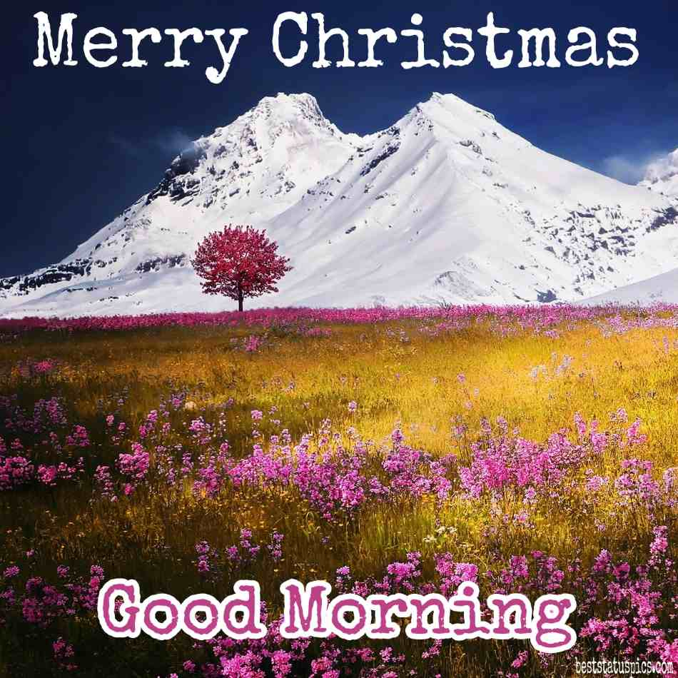 Good morning and Merry christmas 2022 wishes images HD with flower, tree, nature, snow and mountain for love