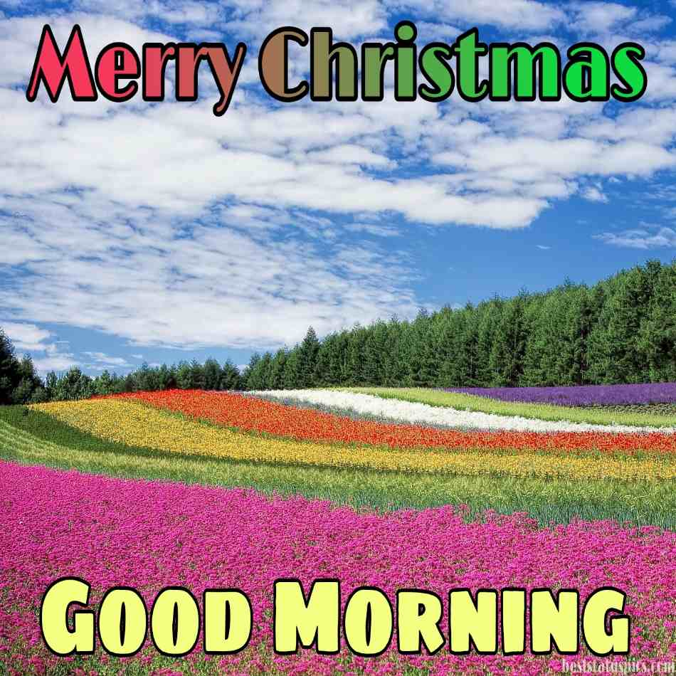 Good morning and Merry christmas 2022 wishes images HD with flower, blue sky, nature, and tree