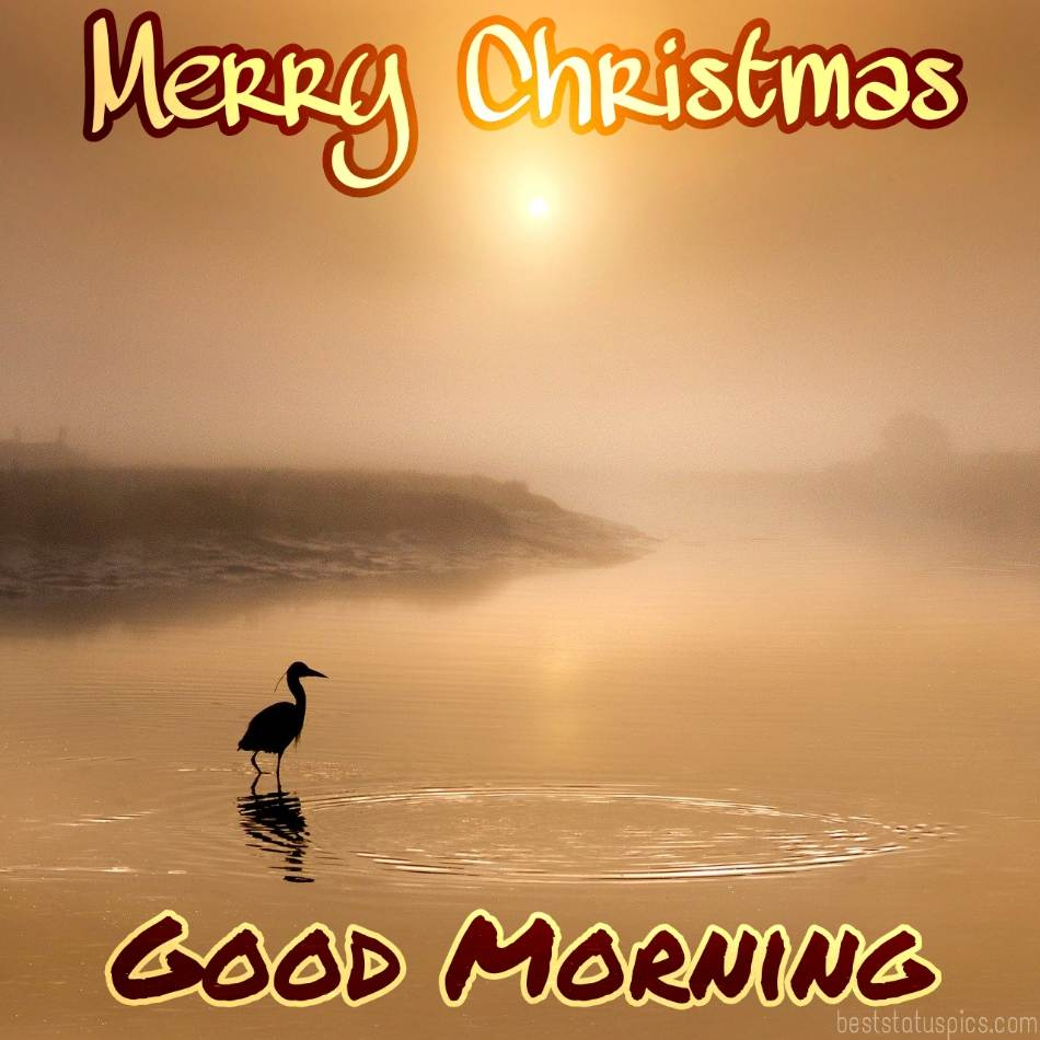 Beautiful Good morning and Merry christmas 2022 greetings and images HD with sunrise, sunshine, river and bird