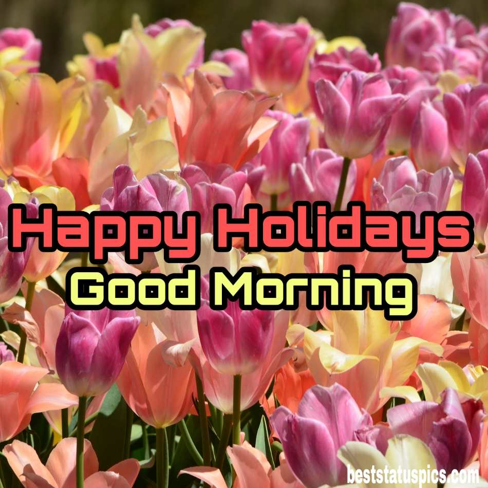 Happy holidays 2022 and good morning wishes images with roses