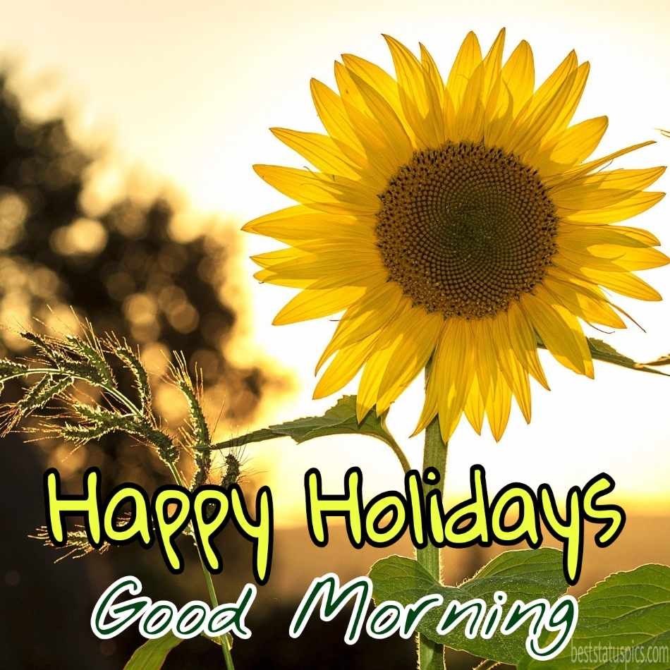 Good morning happy holidays 2022 wishes picture HD with sunflowers and sunshine